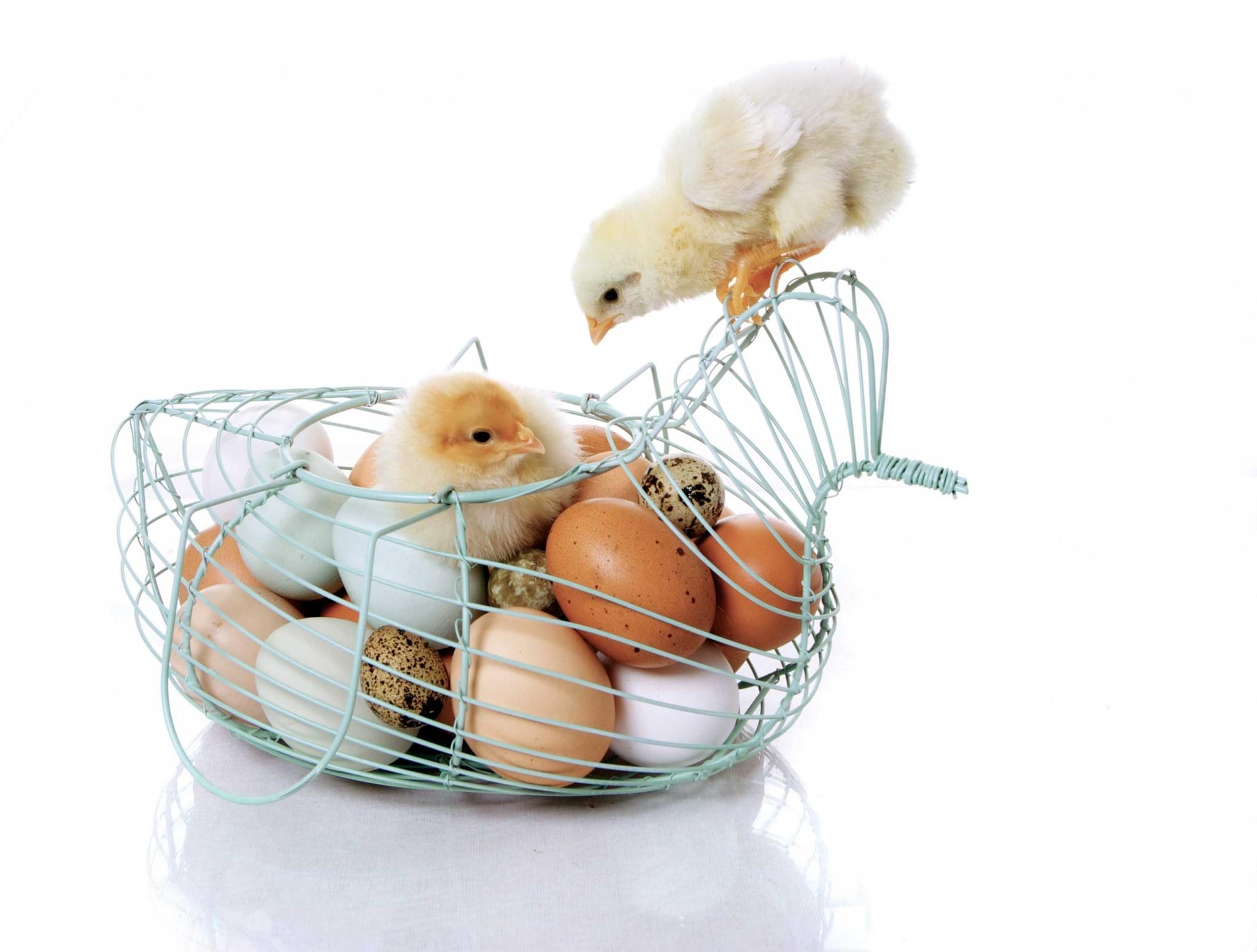 vajcia vomz