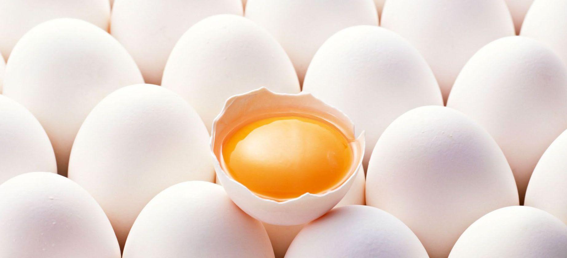 vajcia vomz40